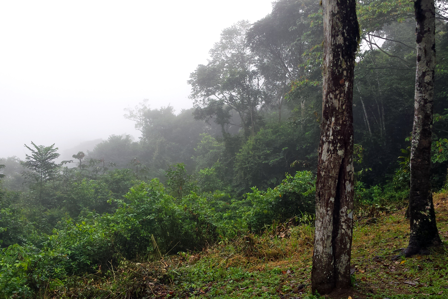 Suriname-6-Brownsberg