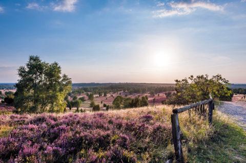 Een 223km lange wandelroute over het grootste heidegebied van Europa