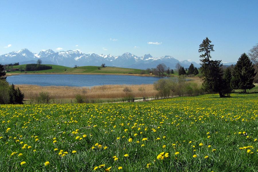 lake-forggensee-OnkelMichel,-Pixabay