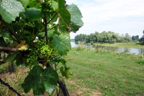 Fietsend langs de 'Loire van de Lage Landen'