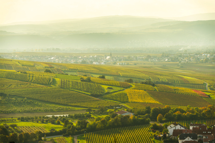 Wijnlandschap-Rijn-Hessen