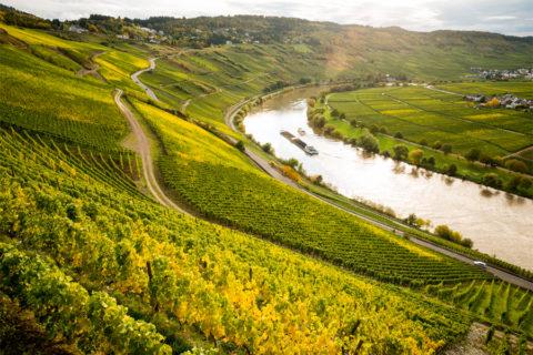 Wandelen over mooi stukje Mosel- en Eifelsteig rond Trier