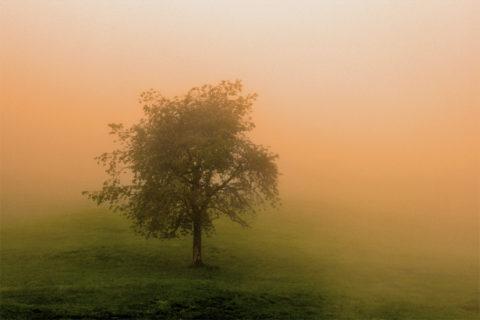 10 tips om je ultieme herfstfoto te maken