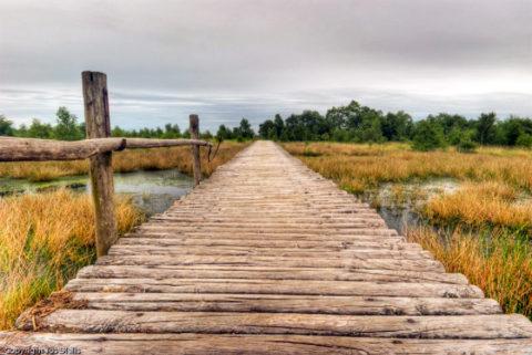 Een wandeling over vlonderpaden en knuppelbruggen in de Groote Peel