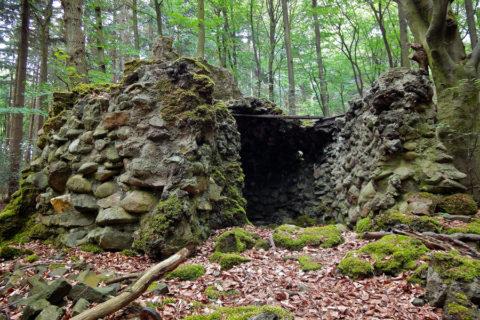 10 dec: Wandelexcursie landgoed De Paltz