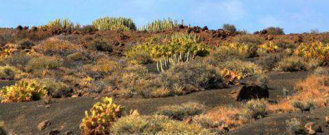 Teno gebergte, ontdekkingstocht door het oudste deel van Tenerife