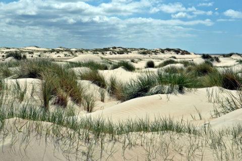 Vier Data: Vier Winterwandeltochten op Texel