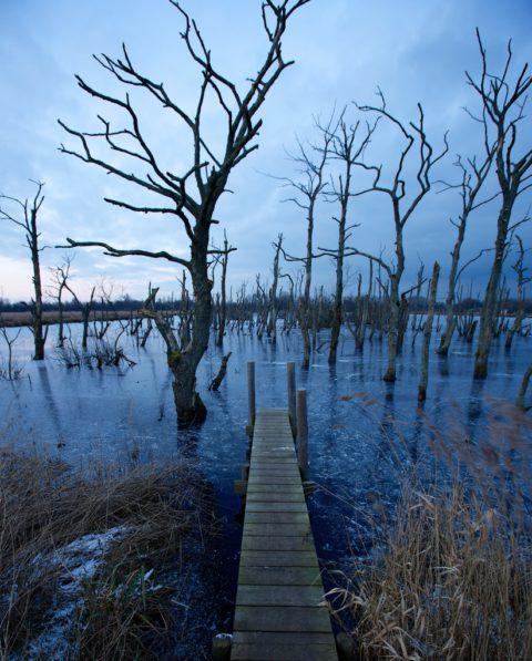 6 jan: Winter vaarexcursie NP De Alde Faenen