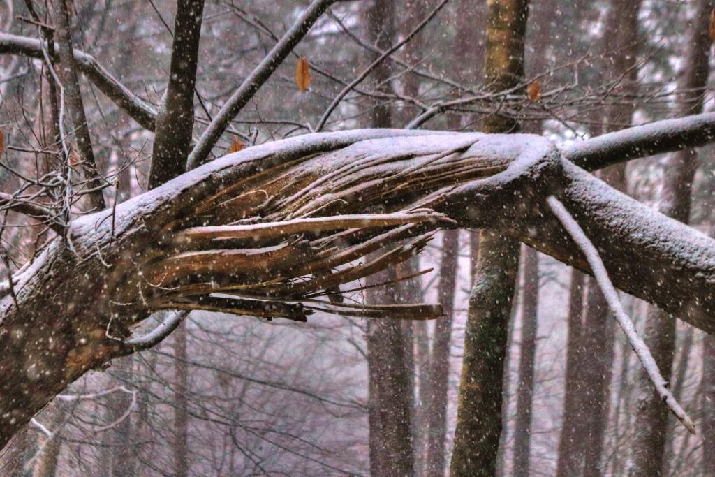 Winter (4) (1024x683)