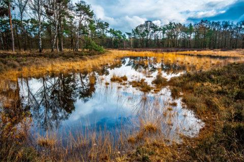 24 febr: Veen- en Heidewandeling bij Haaksbergen
