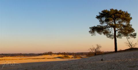 17 februari: Wandeling door de Brabantse Sahara