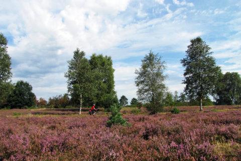 Fietsvakantie over de Lüneburger Heide