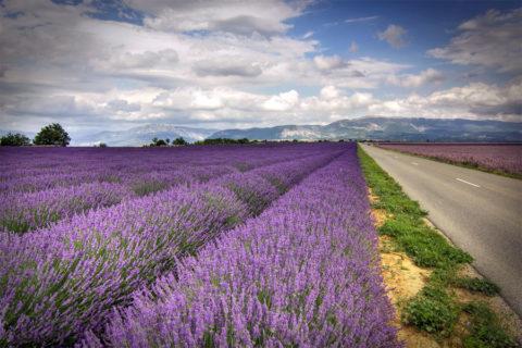 Fietsvakantie rondje Provence