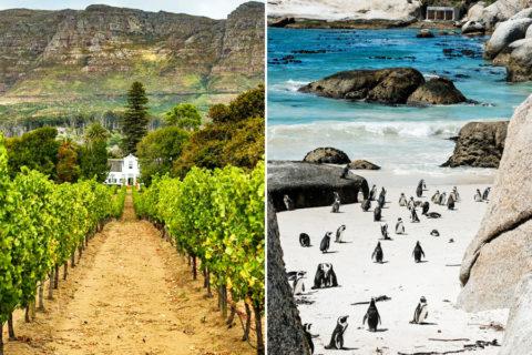 Zuid-Afrikaanse pelgrimsroute langs wijngaarden en pinguïns…