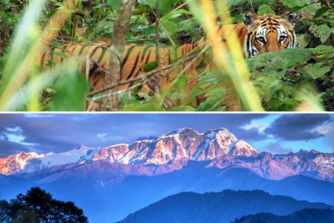 10 aanstekelijke wandelervaringen in Nepal, van jungle tot hooggebergte
