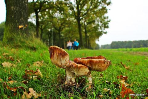 20 & 21 okt: Wandel2daagse door de Drentse Hooglanden