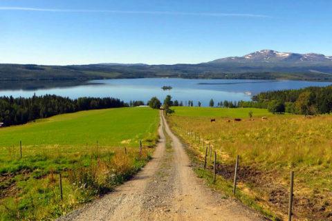 Pelgrimstocht Zweden, wandelen over het eerste deel van het Olavspad