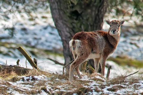 27 jan: Winterwandelexcursie Hoge Veluwe