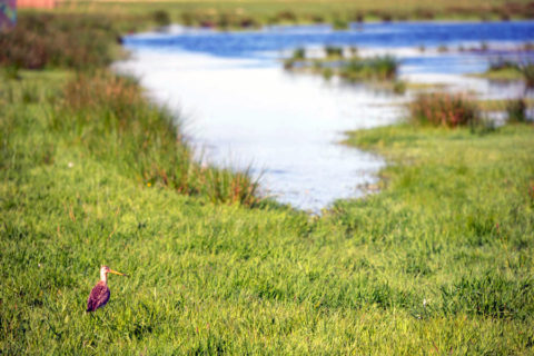 10 mrt: World-Wetlandswandeling Amsterdam