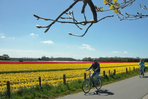 16 t/m 18 april: Fiets-3-daagse in de Bollenstreek