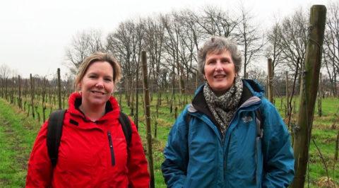 Wandelgids met wandelingen langs Nederlandse wijngaarden
