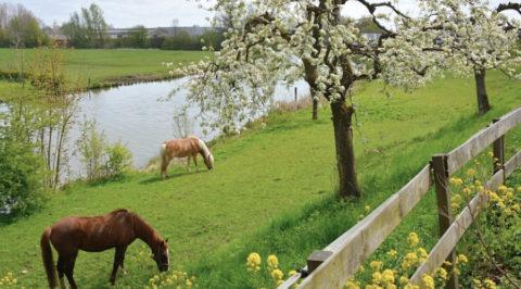 Betuwse Bloesem fietsroute, 70km langs de slingerende Linge