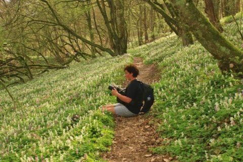 De mooiste wandelroutes in de Hunsrück door beekdalen en oerbossen