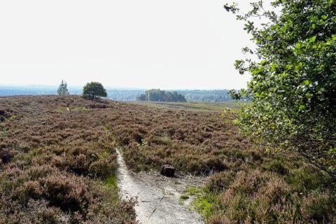 19 juni: Wandeling over de Loenermark, Gelders Landschap