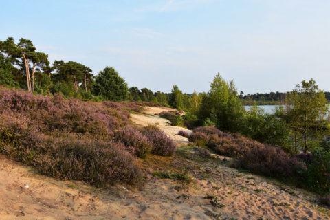6 okt: Herfstwandeling Nationaal Park De Maasduinen