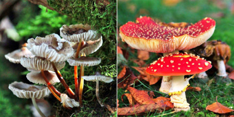 5 & 6 okt: Herfstwandelweekend bossen Austerlitz