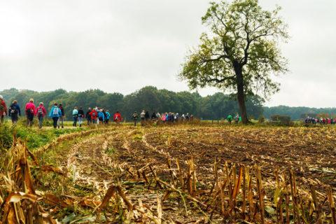 22-25 okt: De Sallandse Wandelvierdaagse