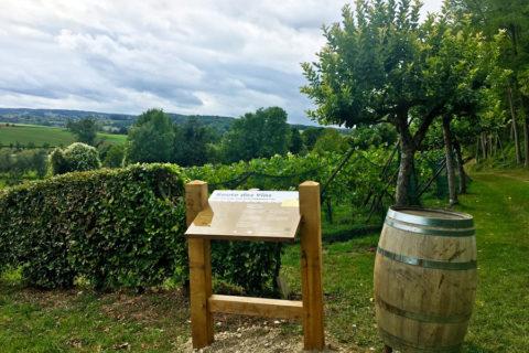 Zuid-Limburg komt met eerste bewegwijzerde Wijnwandelroute
