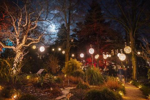 19 dec – 5 jan: Sprookjesachtige winterwandelingen Hortus Amsterdam