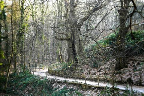 10 dec: Klimmen en dalen in de 'Heerlijkheid Beek'