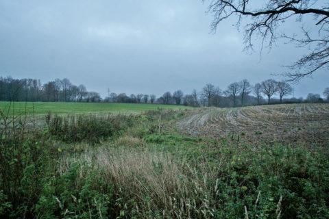 11 jan: Lange Snertwandeling 'het Woold', bij Winterswijk