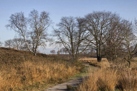 29 dec: Oliebollentocht Nationaal Park De Maasduinen