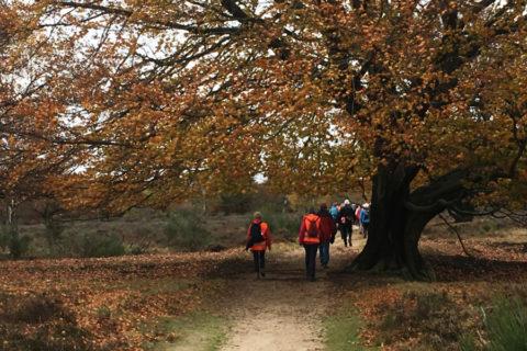 12 jan: Groepswandeling Heide & Spanderswoud in het Gooi