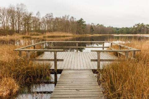 1 febr: Struuntocht vanuit Nijeberkoop door 'It Fryske Gea'