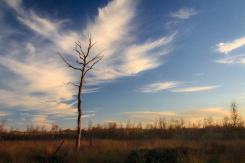 16 febr: Veen- en Heidewandeling Haaksbergen