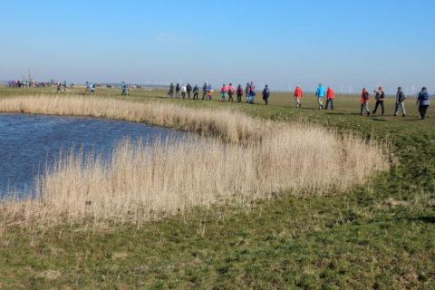 8 mrt: Groepswandeling door de polder van Eemnes