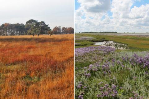De 61 bijzondere natuurgebieden van Friesland