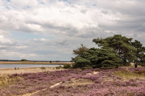 Wandelvakantie mooiste paden van Oost-Drenthe
