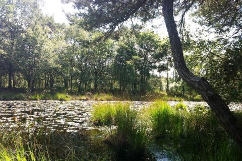 Verken de 21 natuurgebieden van 'Het Groene Woud'