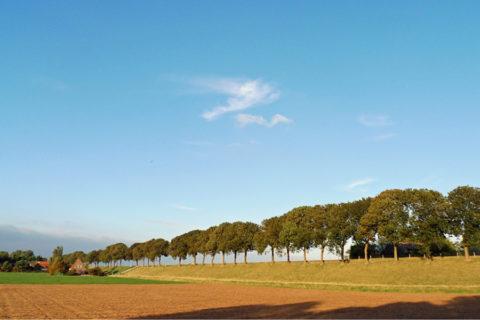 Fietsvakantie Kop van Noord-Holland inclusief Texel