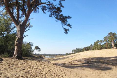 Wandelen over het vernieuwde  250km lange 'Brabants Vennenpad'