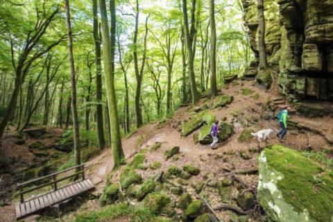 Vier rondwandelingen direct aan de befaamde 'Mullerthal Trail'