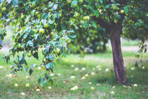 Zeeuwse Fruitwandelroute Kapelle: 17km wandelen, ruiken en proeven