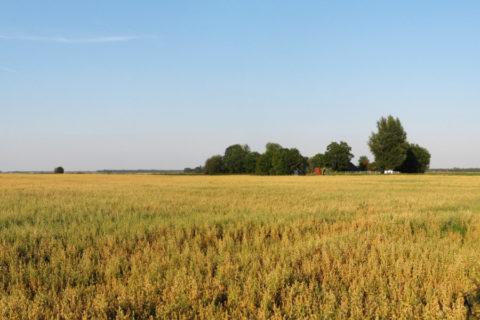 Landelijk wandelen in Groningen met de schoonste lucht van Nederland