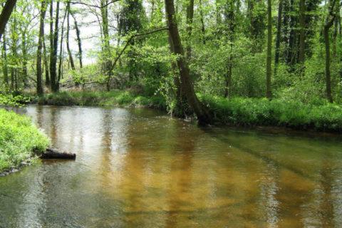 Limburgse Beekwandeling: 12,6km wandelen langs de Swalm
