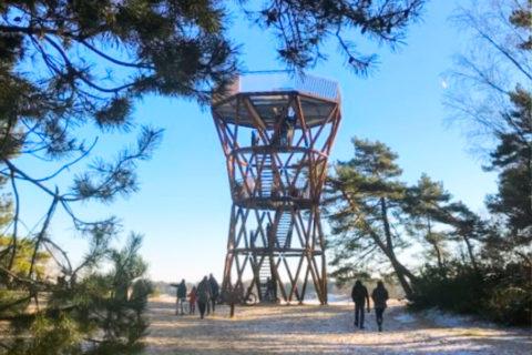 Uitkijken over Kootwijkerzand, grootste stuifzand gebied van West-Europa